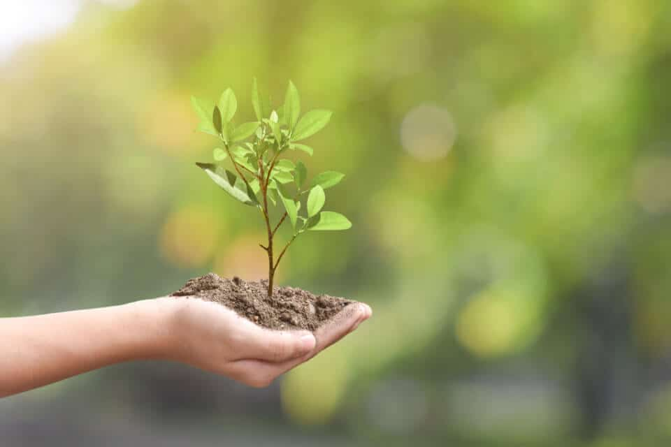 Klimaschutz im Fokus: Viterma startet Partnerschaft mit Plant-for-the-Planet